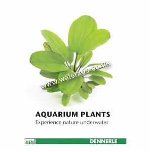 Dennerle Aquarium Plants Guide 2015/2016