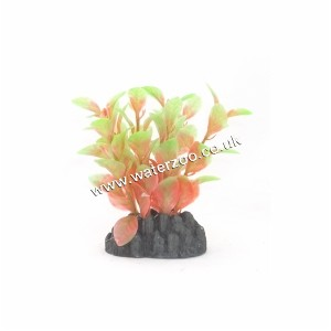 Hugo Kamishi Ludwigia Red/green 13cm