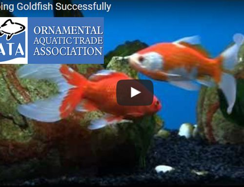 OATA Fishkeeping videos
