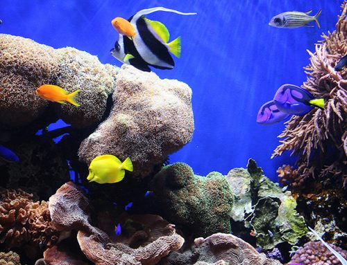 Introduction to marine aquariums 2018